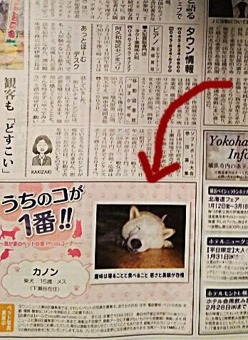 DSC_0114_crop_348x666カノン新聞に載る2