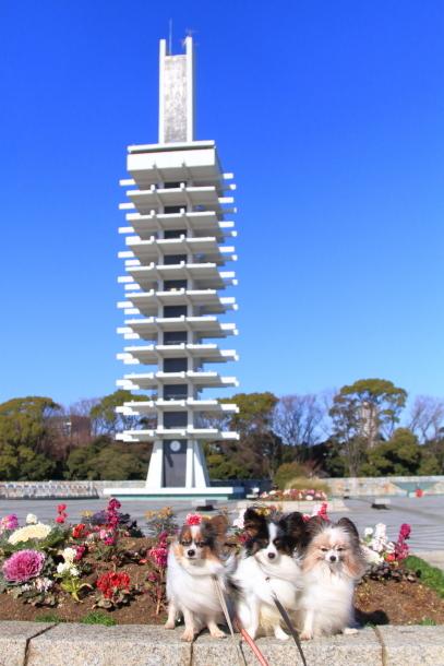 駒沢公園 正月00038085