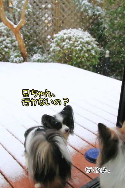 雪4年ぶり00038695