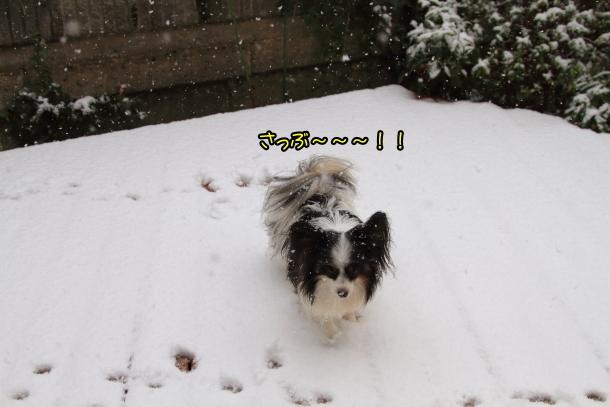 雪4年ぶり00038698