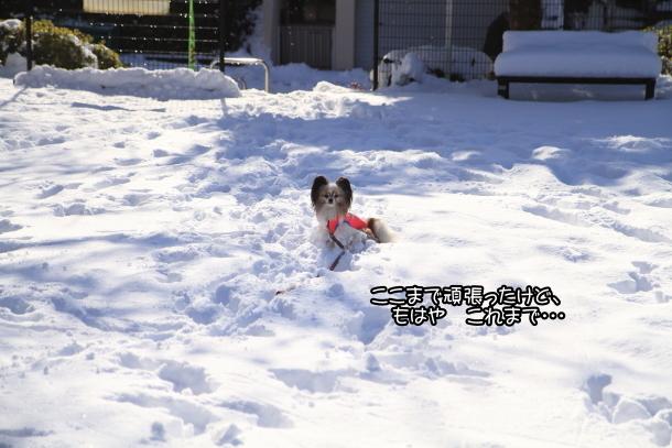 雪4年ぶり00038715