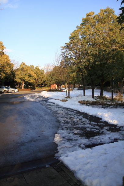 雪のふるさと公園00039488