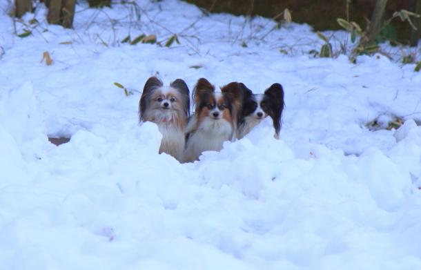 雪のふるさと公園00039474