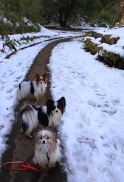 雪のふるさと公園00039477