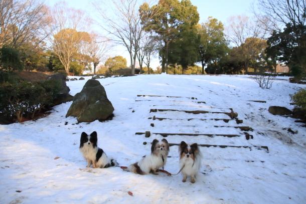 雪のふるさと公園00039480