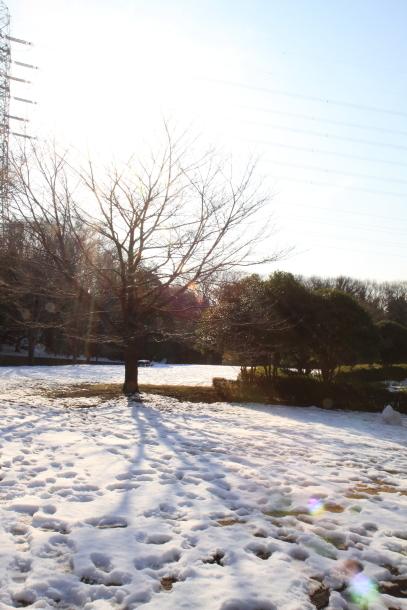 雪のふるさと公園00039319