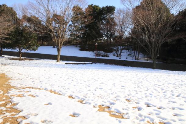 雪のふるさと公園00039320