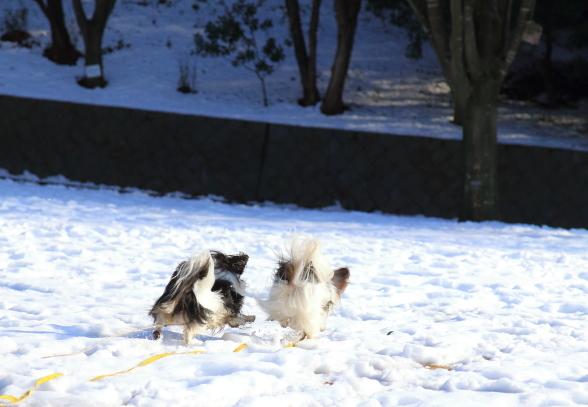 雪のふるさと公園00039342
