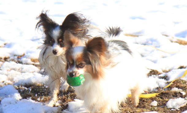 雪のふるさと公園00039351