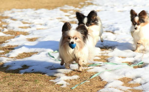 雪のふるさと公園00039327