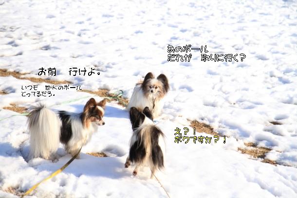 雪のふるさと公園00039374
