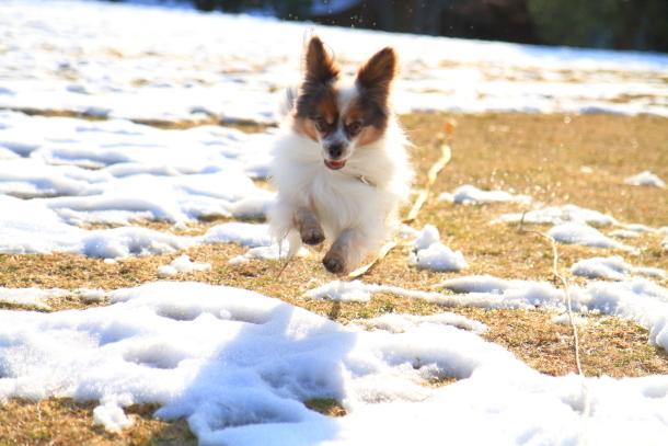 雪のふるさと公園00039393