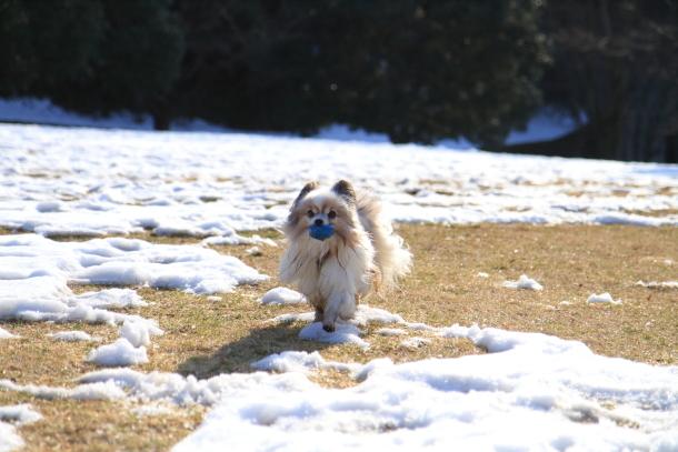 雪のふるさと公園00039418