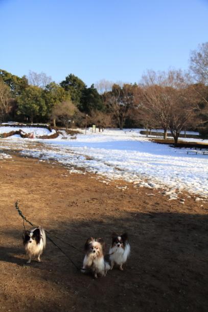 雪のふるさと公園00039460