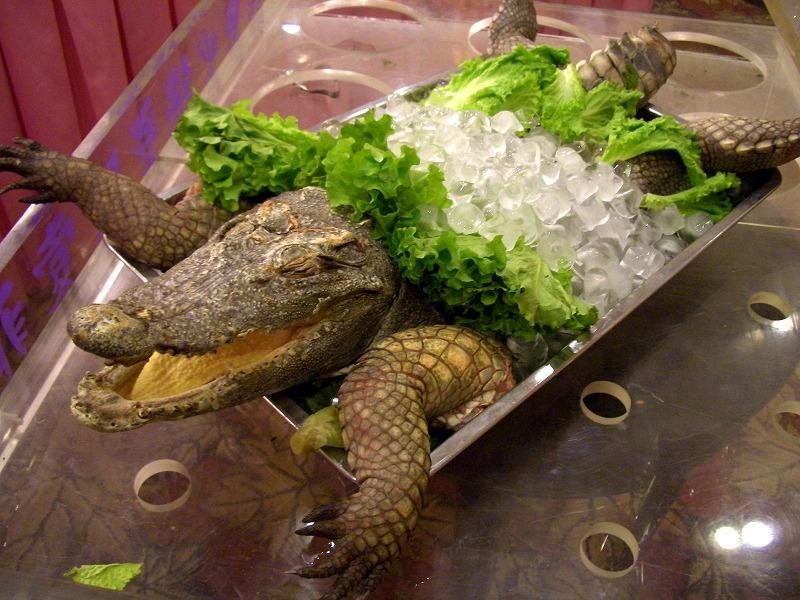 ■ 鰐魚火鍋 (ワニ鍋) 中国・青島