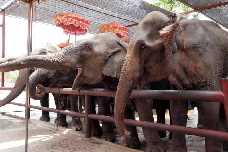 ■ まさいさん、象に乗る。