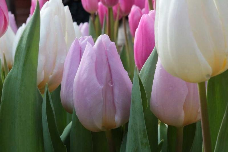 春の入ロ2