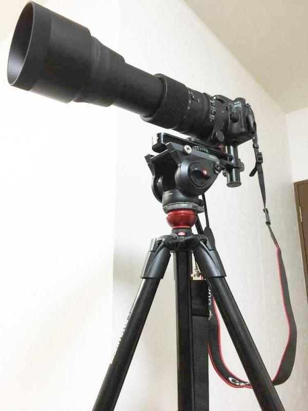 シグマ600mm