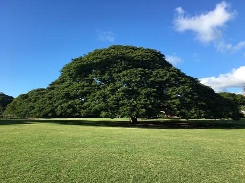 M気になる木1