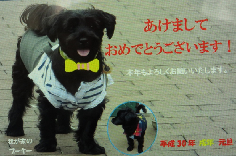 1愛犬2018IMG_3596