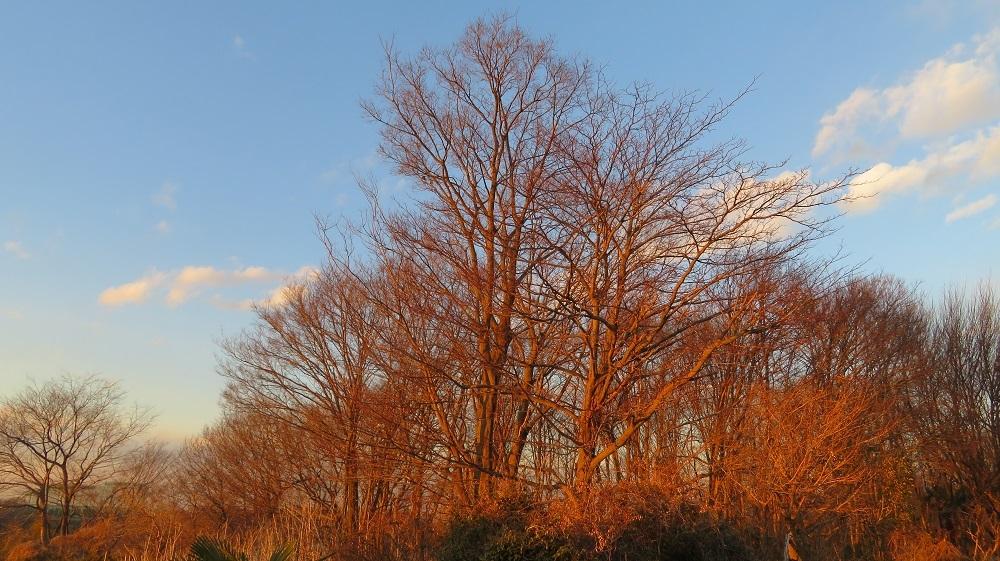 28赤い木々IMG_3858