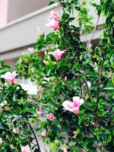 冬でも咲いてますwハイビスカス。