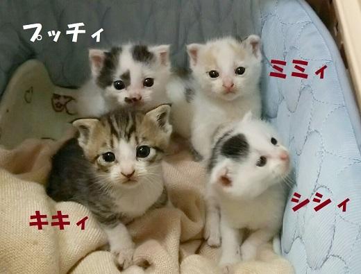 ミミィ・キキィ・シシィ・プッティ (1)