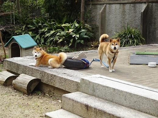 メル・ノル 犬