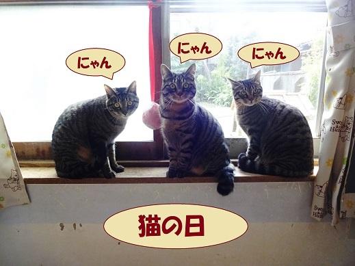 ピピック・イチカ・ヨカ1