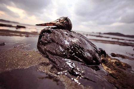 oil22.jpg