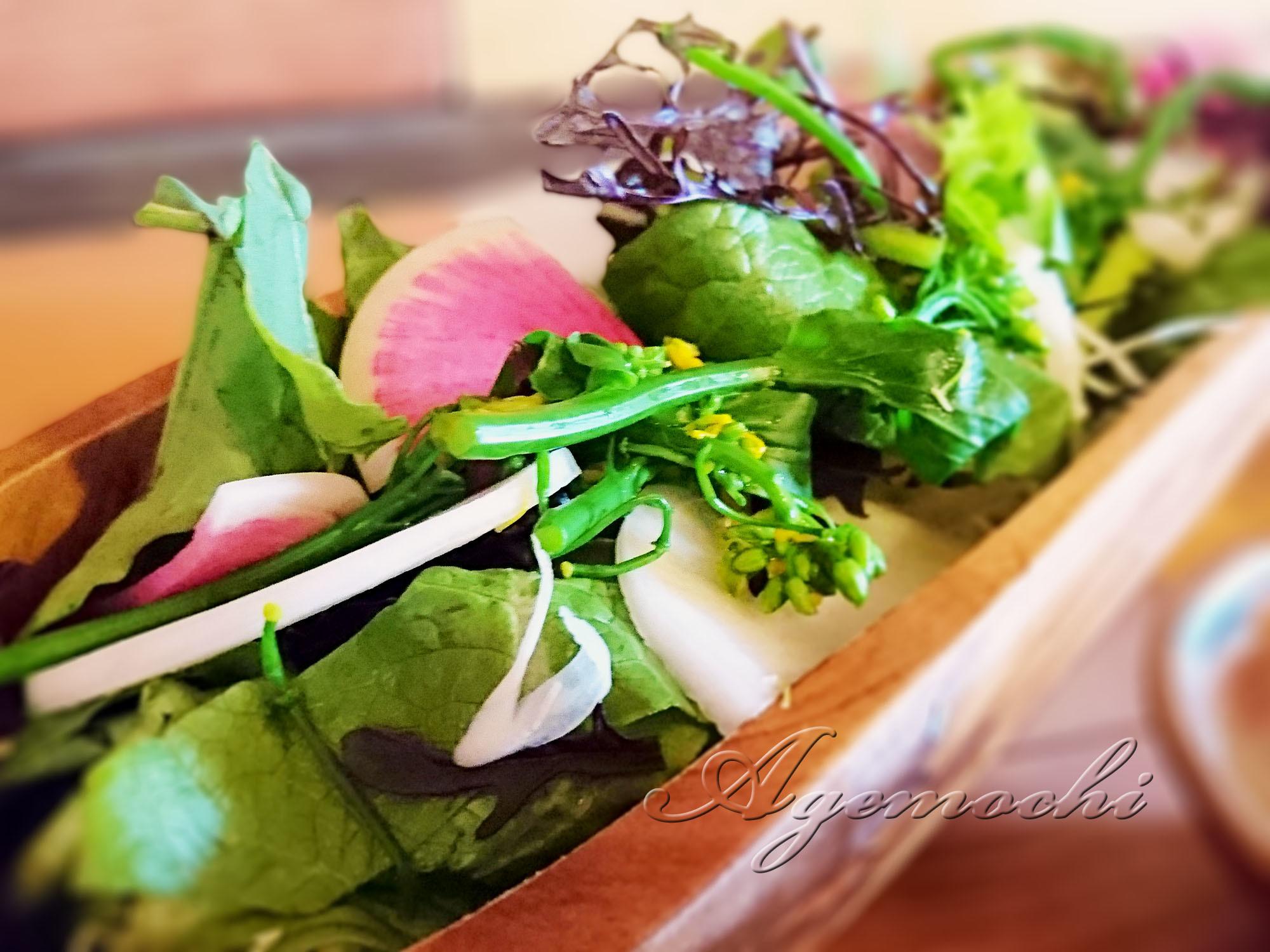 sachicafe2_salad.jpg