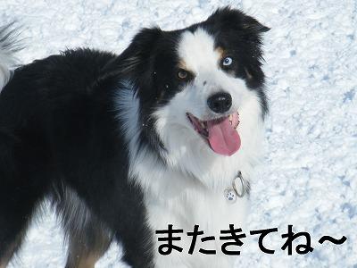 16けん (1)