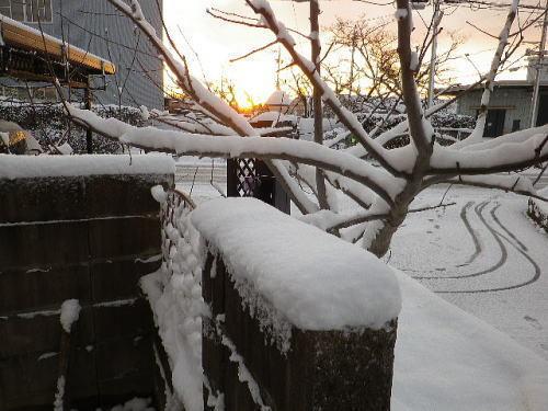 2018 1 25 積雪-2