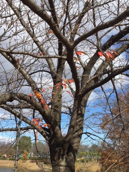 1201数枚の葉 桜