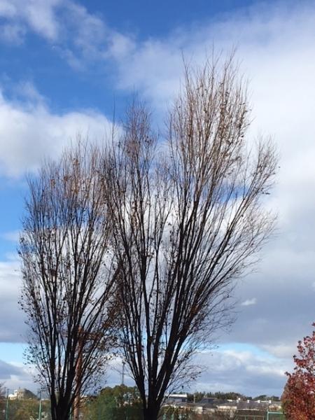 1201冬の木