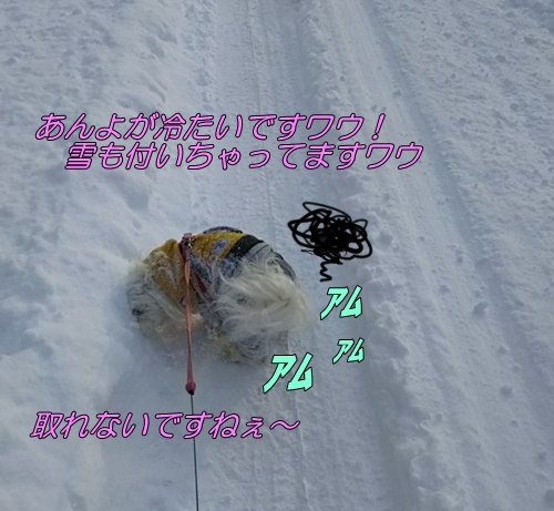 DSC_2295.jpg