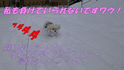 DSC_2358.jpg