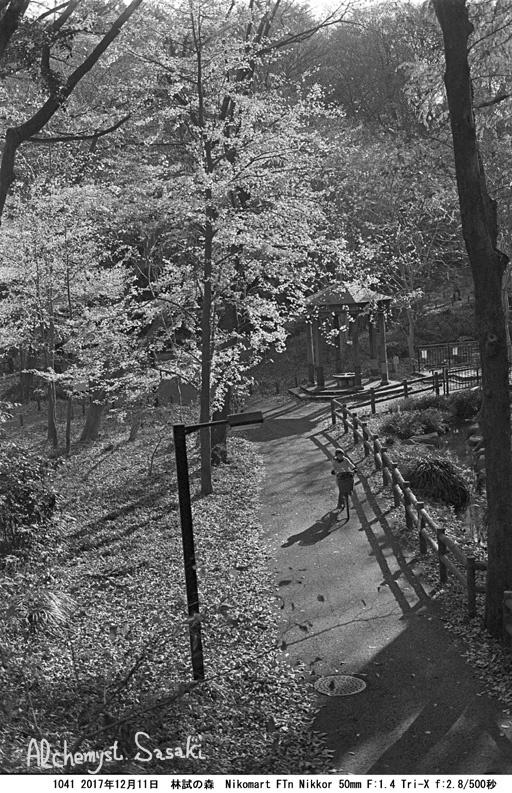 初冬の林試の森公園1041-39