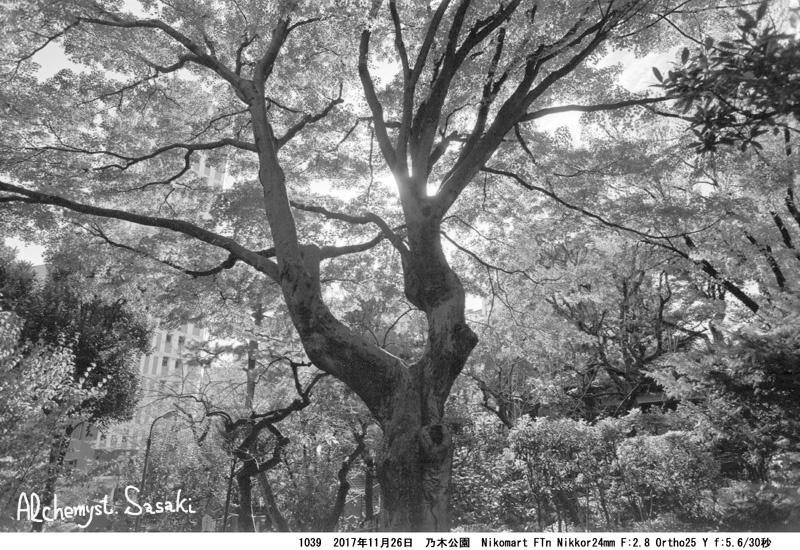 都会の森1039-39