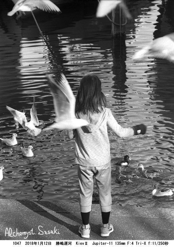 鳥を操る少女1047-19