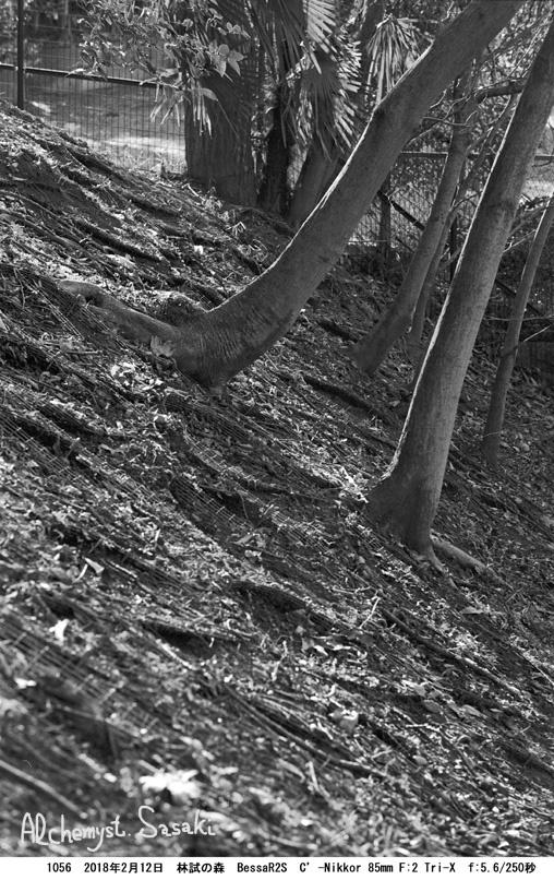 林試の森1056-24