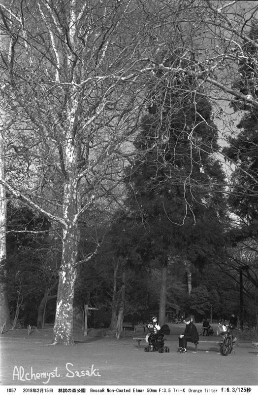林試の森1057-13