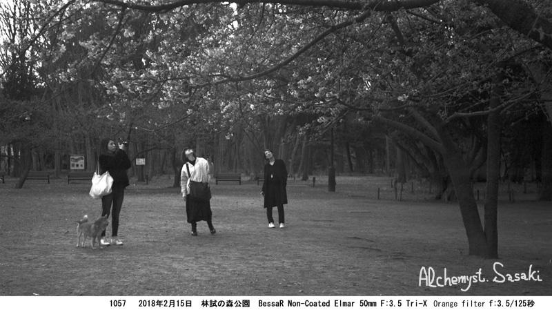 林試の森1057-18 Ⅱ