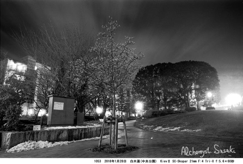 白木蓮1053-39