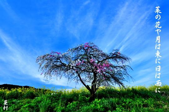 62-蕪村・菜の花や月は東に日は西に