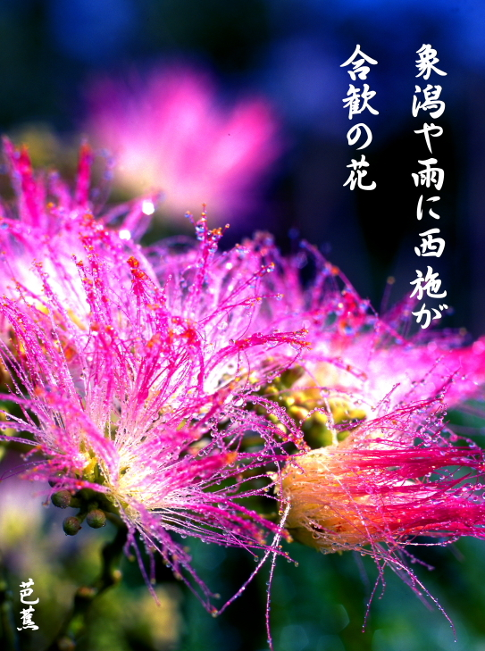46-②芭蕉・象潟や雨に西施がねぶの花(象潟)