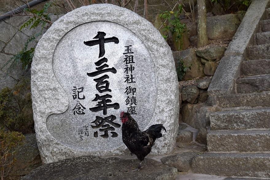 玉祖神社水仙 (1)