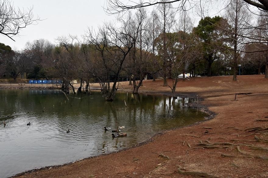 真冬の蜻蛉池 (6)