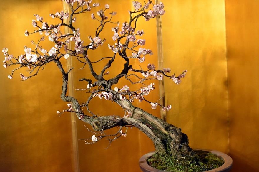 盆梅と盆石展 2018 (0)
