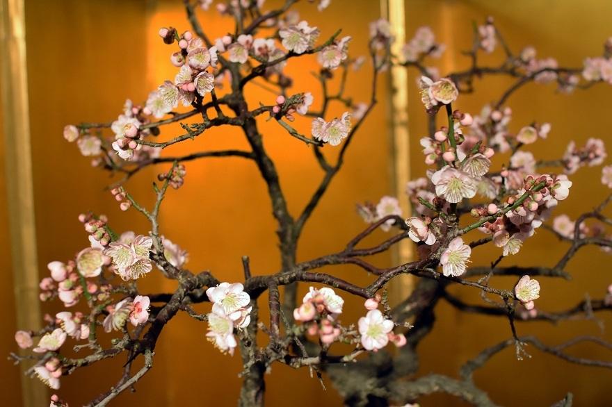 盆梅と盆石展 2018 (3)